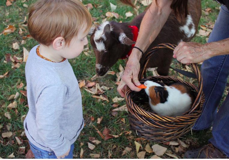 child with farm animals